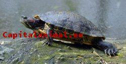Acuarios para tortugas grandes ❤️ Mejores alternativas online