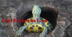 Adquiere On-line el terrario para tortugas de agua