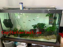 Adquiere Online el acuario 200 litros