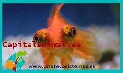 Adquiere online el acuario marino