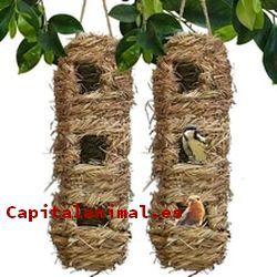 Aviarios de canarios ¿Merece la pena su compra?