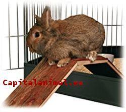 Cepillos para conejos ❤️ Mejores alternativas online