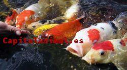 Comentarios y opiniones de filtros para estanques de peces para comprar por Internet