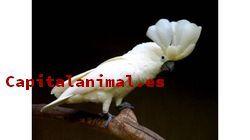 Comidas para aves - Catálogo online - Top 20