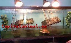 Comidas para tortugas ❤️ Mejores alternativas online