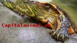 Compra On-line el terrario para tortugas de tierra