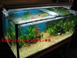 Compra Online el acuario agua caliente