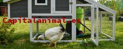Compra online el gallinero pequeño