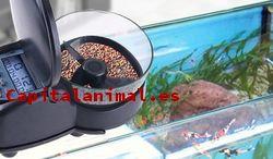 ¿Cuál es el mejor comedero automatico para peces kiwoko de este mes?