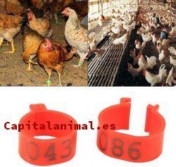 ¿Cuál es el mejor pienso para gallinas para el 94% de los usuarios?