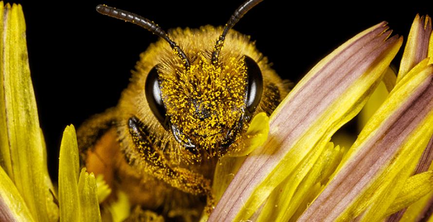 ¿Cuál es el mejor repelente de abejas para   los expertos?