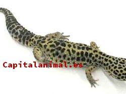 ¿Cuál es la mejor manta termicas para reptiles de este mes?