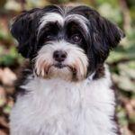 Listado de piensos para perros now fresh para comprar – Los más pedidos
