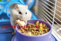 Jaula para hamster: ¿Merece la pena su compra online?