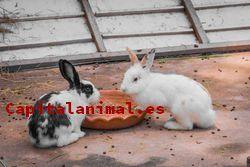 Jaulas para conejos belier Inconvenientes y Ventajas