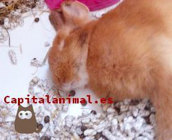 Listado de casas para conejos para comprar desde el sofa