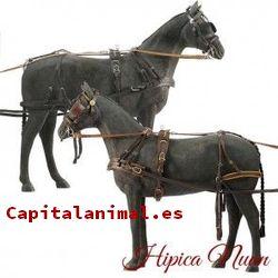 Listado de enganches de caballos para comprar – Los más solicitados