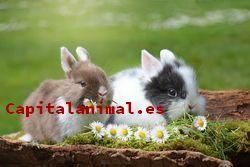 Listado de juguetes para conejos para comprar por internet