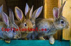 Listado de juguetes para conejos toy para comprar – Los más vendidos
