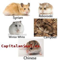 Los mejores bebederos de hamster online
