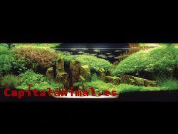 Mejores acuarios natural - Comprar Online