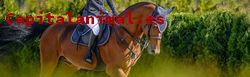 Mejores alforjas para caballos de este mes - Cómpralas on-line