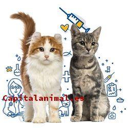 Listado de antibioticos para gatos para comprar desde el sofa