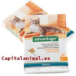 Compra On-line el antipulgas para gatos