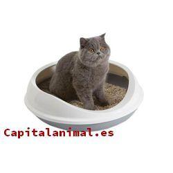 areneros para gatos cerrado baratos