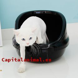 areneros para gatos trixie baratos