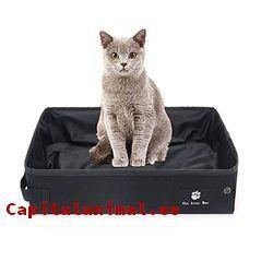 areneros para gatos xxl baratos