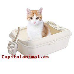 Listado de areneros para gatos para comprar – Los más solicitados