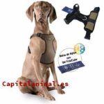 Promociones online de piensos para perros affinity ultima