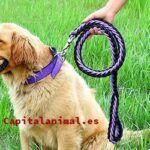 Listado de cepillos cerdas naturales para perros para comprar – Los más vendidos