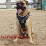 Lista de bozales para perros peligrosos para comprar – Los más comprados