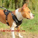 Royal canin hipoalergenico gatos ¿Compensa su compra?