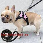 Pienso para perros esterilizados: ¿Merece la pena su compra online?