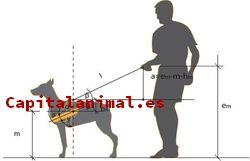 Mejores arneses para caballos - Dónde comprar online
