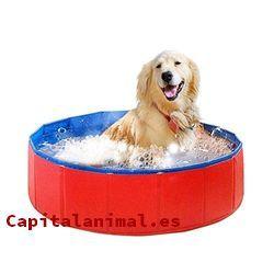 bañeras para perros baratos