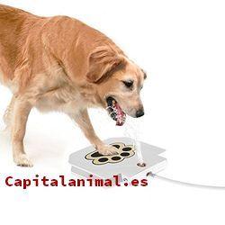 bebederos automaticos de perros baratos