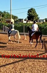 Mejores bebederos de caballos de este año - Cómpralos Online