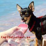 Bebederos de perros ¿Compensa su compra?