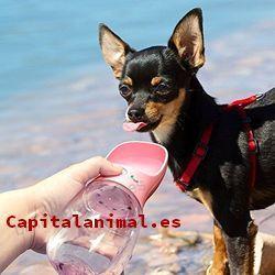 bebederos de perros baratos