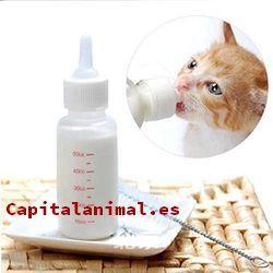 biberones para gatos baratos