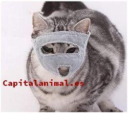 Lista de bozales para gatos para comprar – Los más solicitados