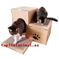 Cajas de arena para gatos Inconvenientes y Ventajas