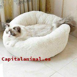 Adquiere On-line la cama para gatos