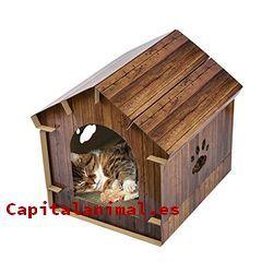 casas termica para gatos baratos