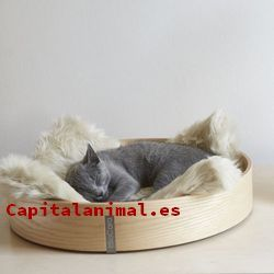 cestas para gatos baratos