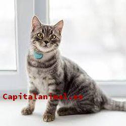 Mis 8 predilectos chips localizadores para gatos
